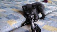 Евгений Плющенко помог котенку найти новую семью